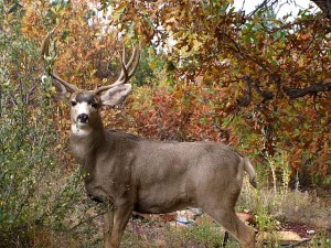 maryloujanocko.deer.17